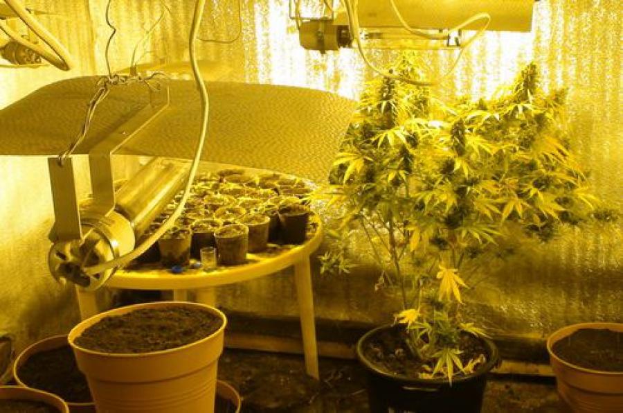 В домашних закон выращивание марихуаны условиях марихуану симптомы когда курят