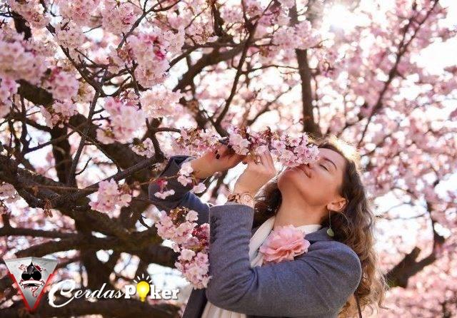 Raih 5 Manfaat Bunga Sakura Untuk Kecantikan Kulit