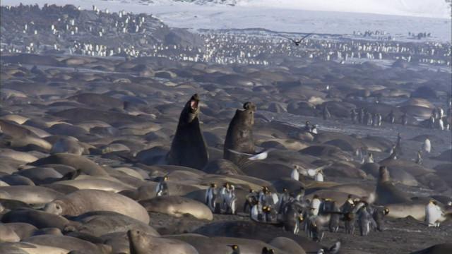 Frozen-Planet-S01-B02-1080p-Dual-HD-TR-Blu-Ray-x264-Uzayli-mkv-snapshot-38-59