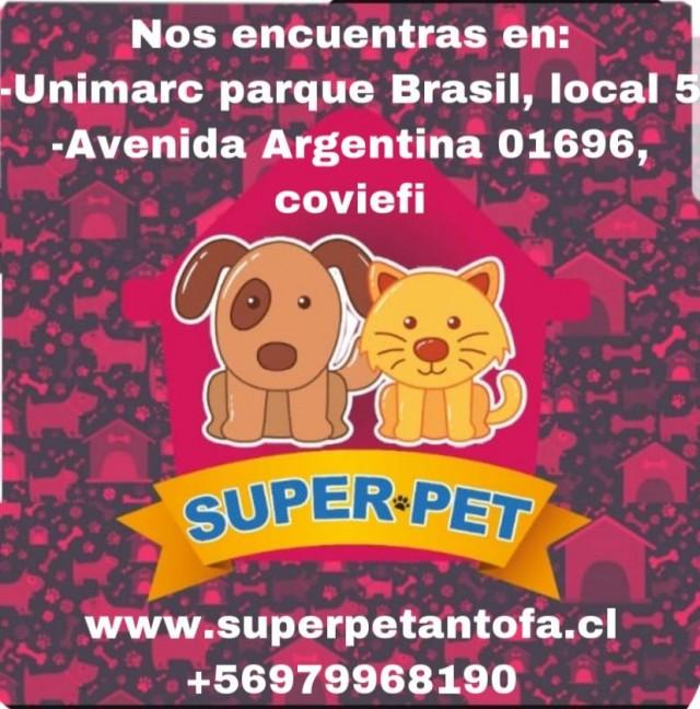 Mascotas-Antofagasta