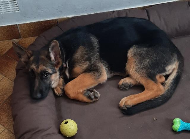 Les chiens 20210913-144248