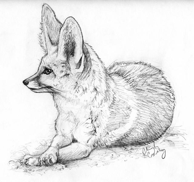 Fennec-Fox-2.jpg
