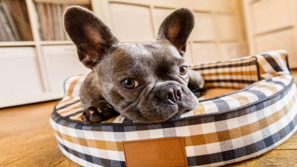 Dog Bed: Which is the Best of 2021?