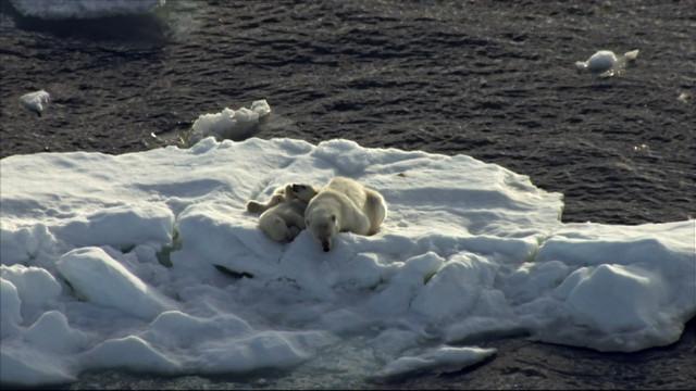 Frozen-Planet-S01-B03-1080p-Dual-HD-TR-Blu-Ray-x264-Uzayli-mkv-snapshot-48-15