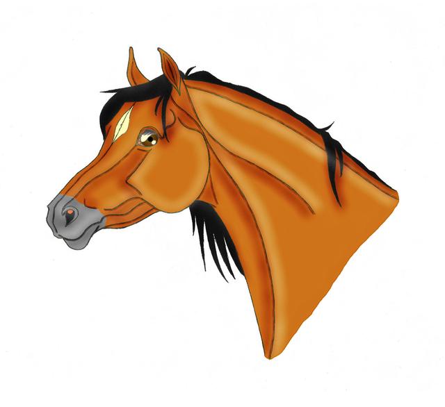 Arabianhevosen pää (2€).png