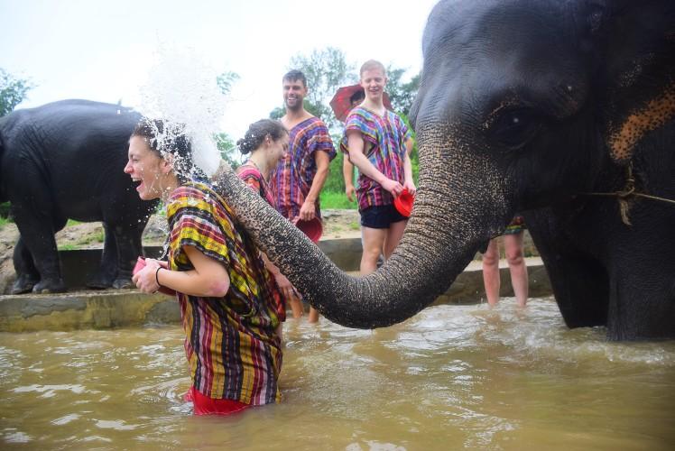 elephant-tour-chiangmai