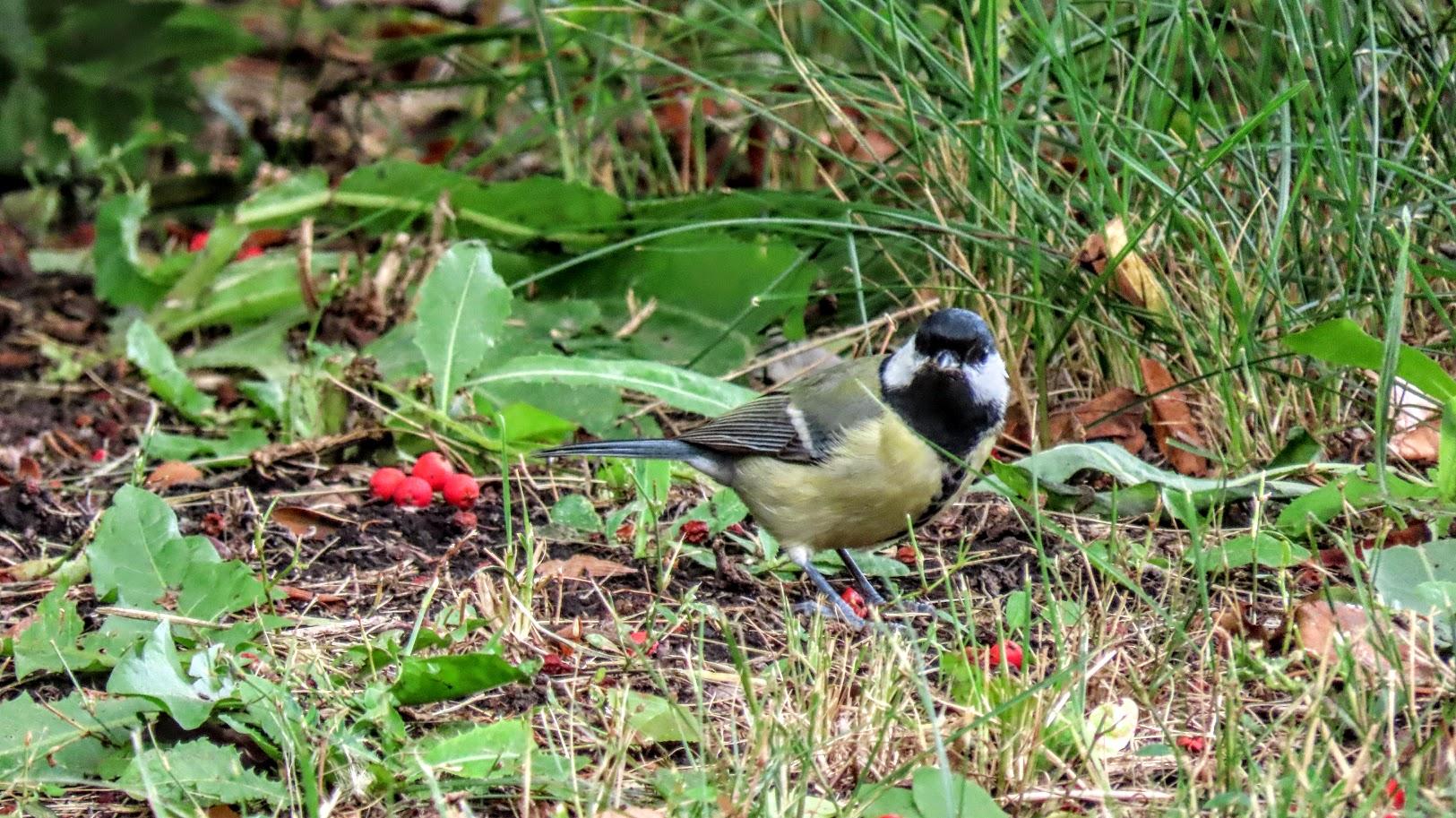 Зеленоглазый и птички 35846408
