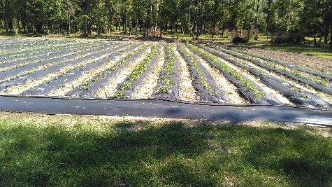 scottys-garden
