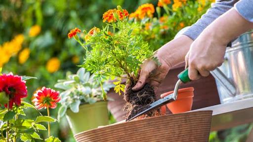 Banyaknya Manfaat Kesehatan yang Luar Biasa dari Berkebun dan Mengapa Anda Perlu Melakukannya