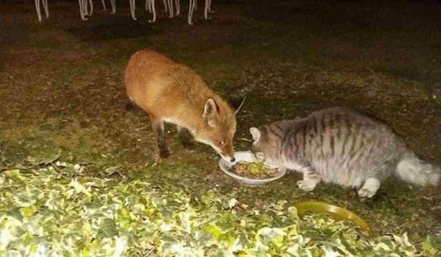 Il gatto e la volpe Gattovolpe