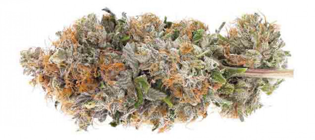 When you buy weed online in Canada, you get instructions about dosage with the products. If you end up taking a very large dose, the effects may last longer than 4-12 hours.Visit https://getwhitepalm.co/