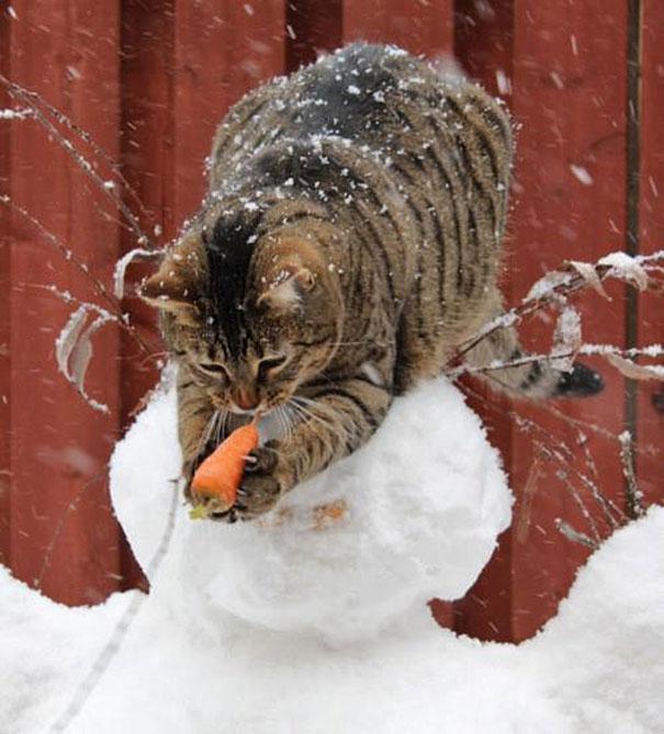 Коты, которых поймали на горячем - 45 отчаянных фотографий - 9