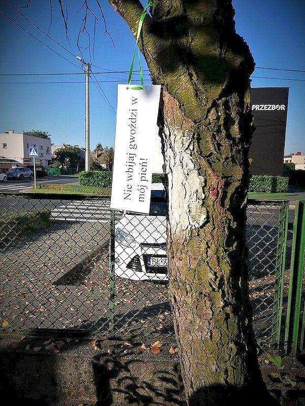 Ekolog-i-s-wie-to-drzewa-218.jpg