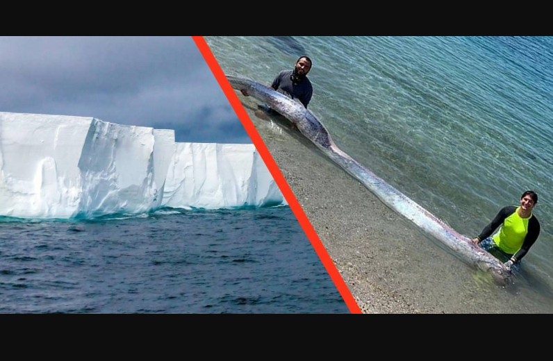 Prima il Pesce Remo Gigante in Messico e poi il Violento Terremoto in Alaska.