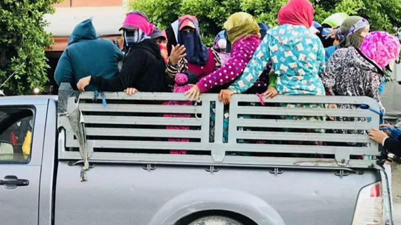 แรงงานหญิงภาคเกษตรกรรมในตูนิเซีย พบความเสี่ยงจากการเดินทาง