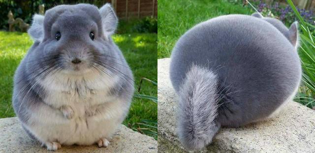 圓胖胖 Image