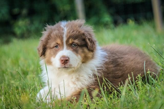 https://i.ibb.co/HNtFg6n/train-puppy.jpg