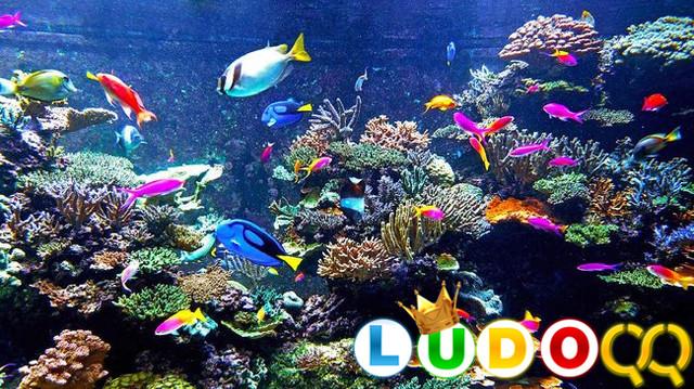 Berikut 5 Pilihan Ikan Hias Air Laut yang Mudah Dipelihara