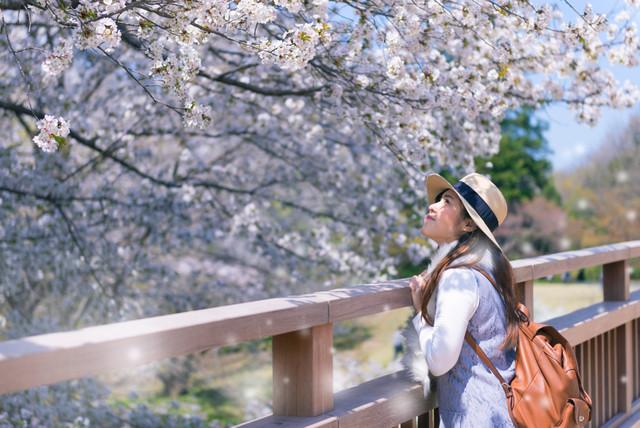 Japan-Sakura-Kobe-Plus-Shirakawago-Holiday-by-SQ-Spring-at-Ueno-Park