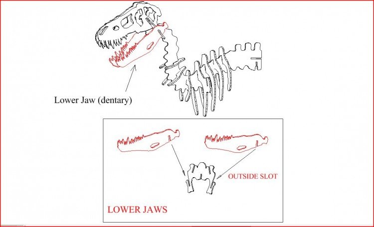 Lower jaw 3D DINOSAUR PUZZLE