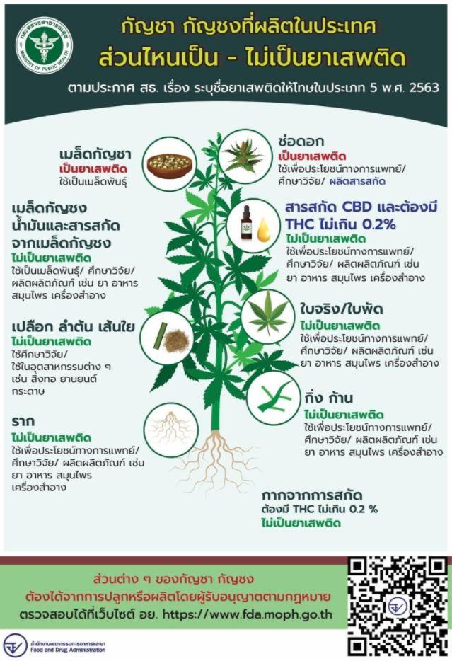 ดอกกัญชาเป็นยาเสพติด,ดอกกัญชงเป็นยาเสพติด,เมล็ดกัญชาเป็นยาเสพติด,เมล็ดกัญชงไม่เป็นยาเสพติด