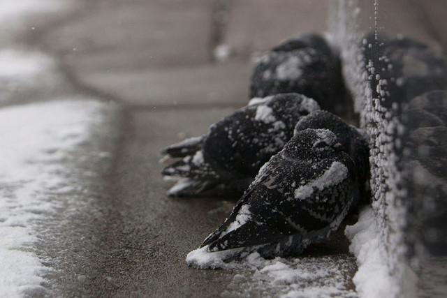 perros-callejeros-congelados