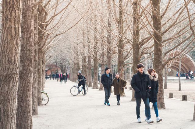 Korea-Winter-Express-Plus-Illumination-Festival-Winter-at-Nami-Island