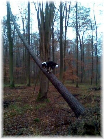Enie11-Baum-Bild183