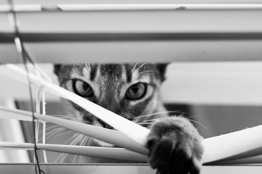 Таинственная кошачья жизнь в чёрно-белых фотографиях-2
