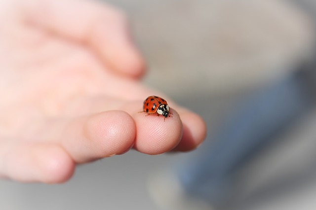 An image of a ladybird sitting on someone's hand.