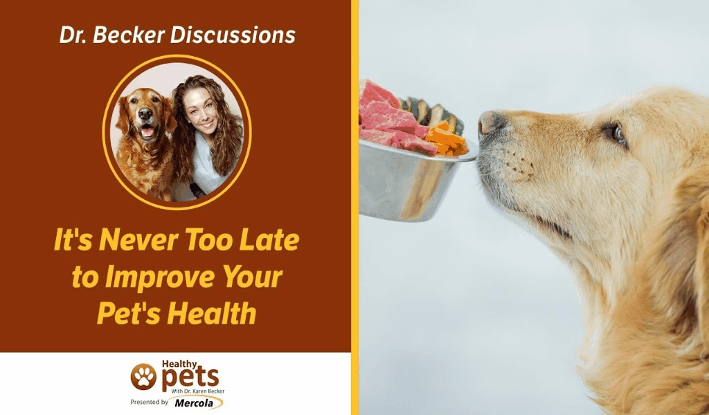 The Pet Dog Health Pharmacy