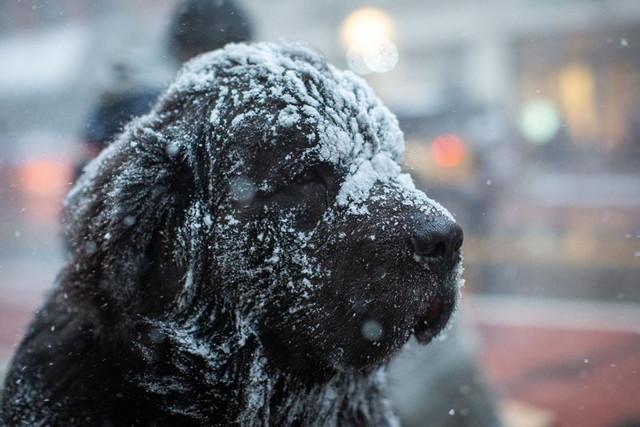 perro-congelado
