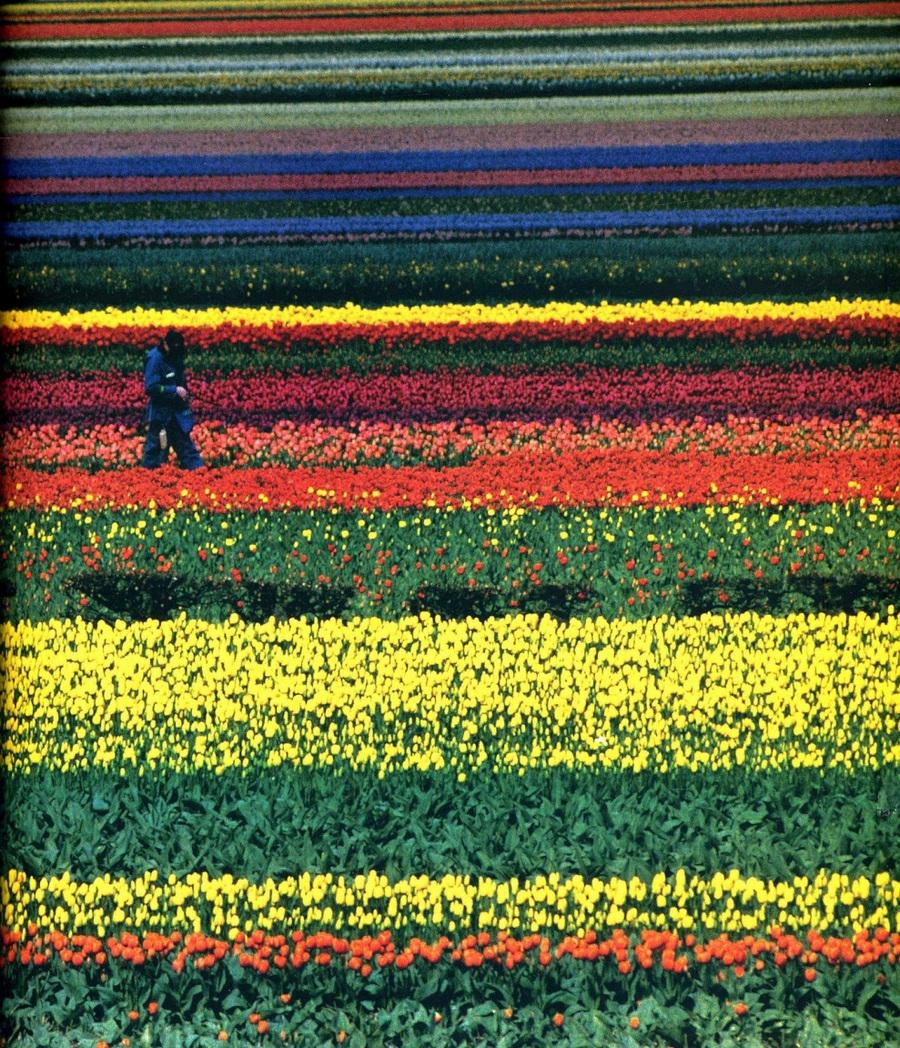 fotografii National Geographic 65