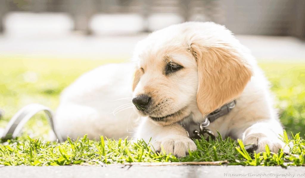 Pet Dog Breeds Family
