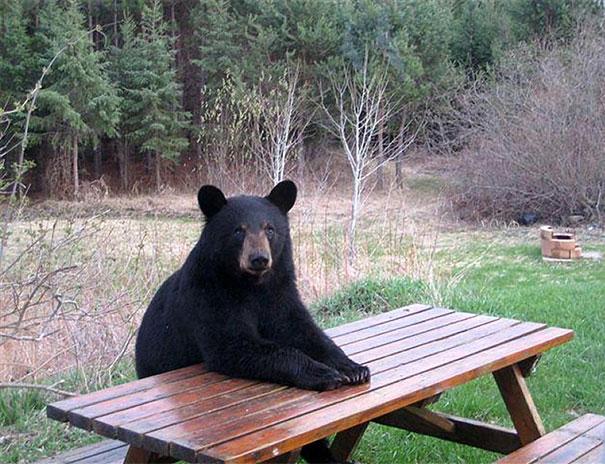Медведи, такие медведи-15