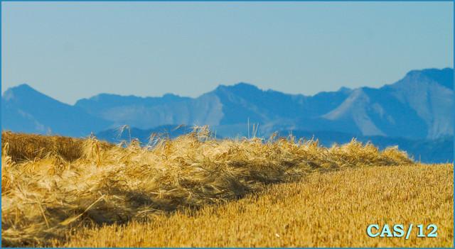 barley-mountains-DSC01507.jpg
