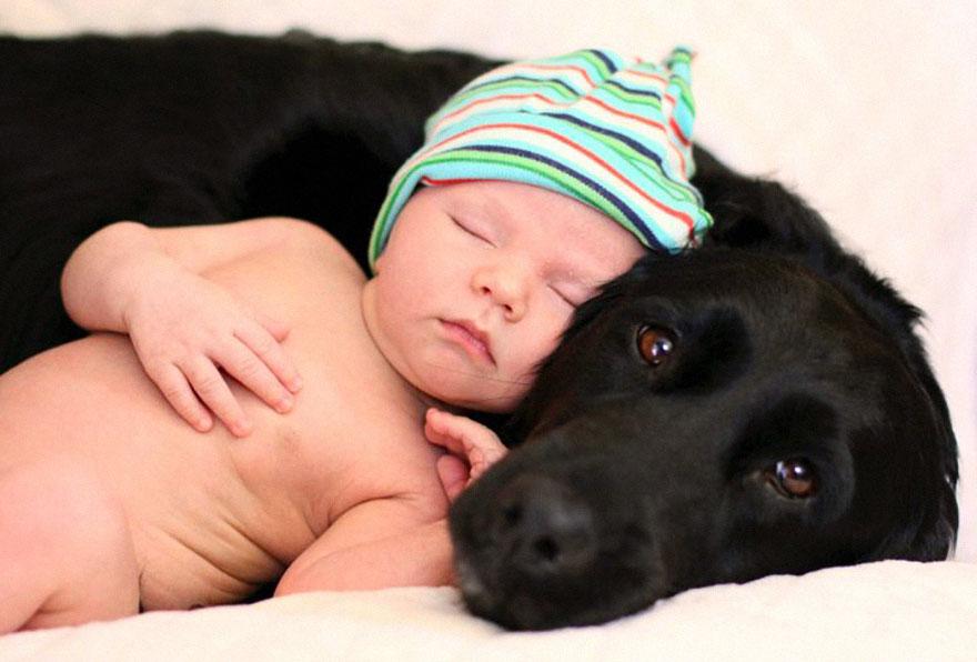Когда собаки большие, а дети маленькие - 44 потрясающие фотографии - 12