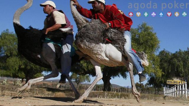 Gulat Kaki hingga Balap Burung Unta, Ini 6 Olahraga Unik di Dunia