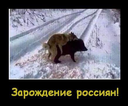 """Кремлівські байки, стратегічні партнери, голуб миру. Свіжі ФОТОжаби від """"Цензор.НЕТ"""" - Цензор.НЕТ 2862"""