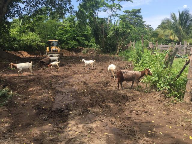 Helpful-Goats