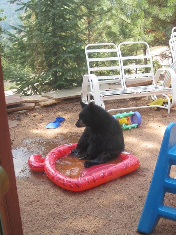 Медведи, такие медведи-28