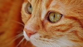 La stérilisation des chats libres
