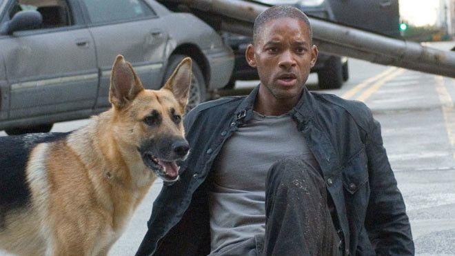 13 знаменитых собак, снявшиеся в кино