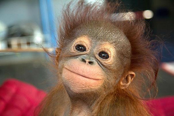 30 фотографий самых счастливых животных на планете-26