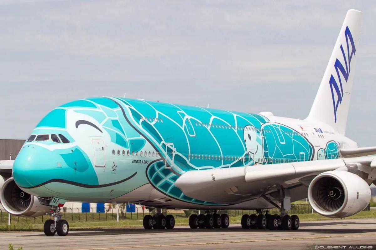 Giappone: Tartaruga blocca per 12 minuti l'aeroporto Narita di Tokyo