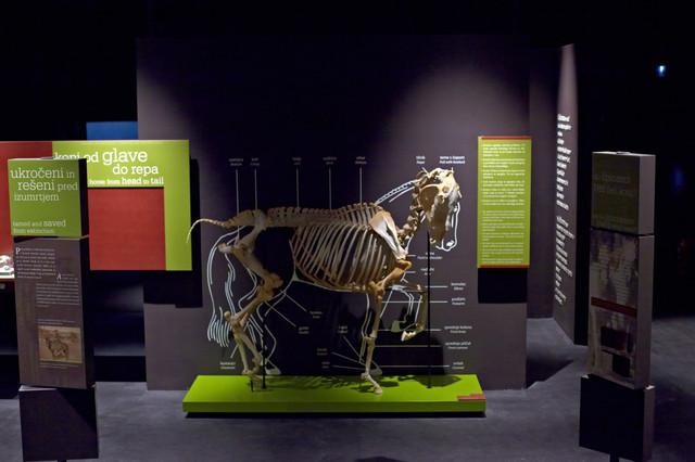 Muzej lipikum skelet