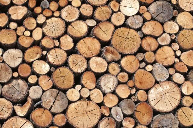 kumpulan kayu