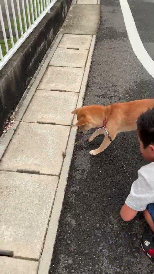 Topics tagged under 柴犬 on 紀由屋分享坊 Image