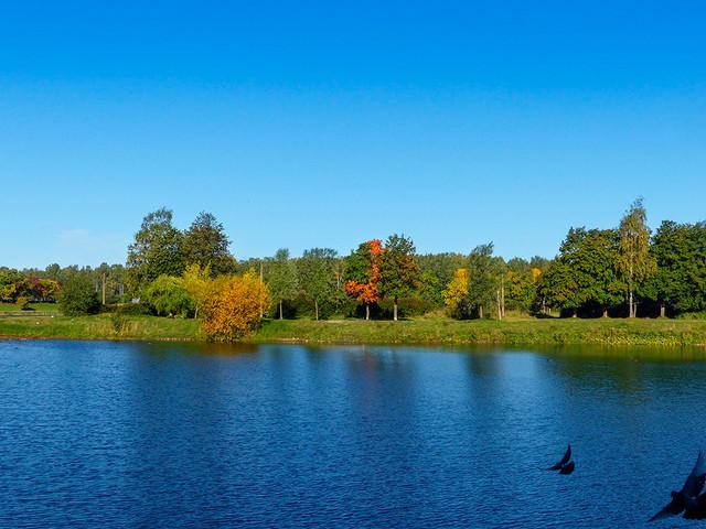 Осенний блюз. 1-й этап. *