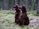 dog-2513846-1920